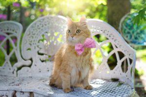 Annies Cat